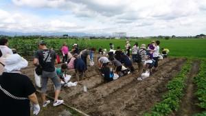 ジャガイモ掘り!!